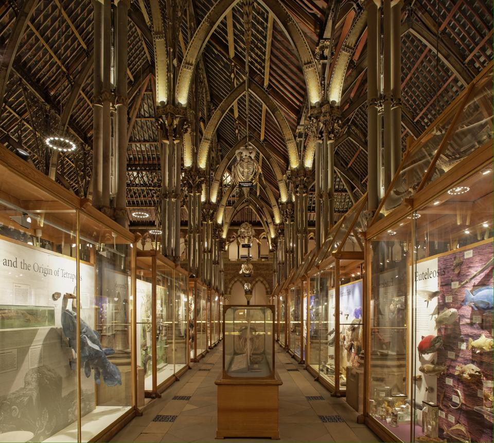 Jobs Natural History Museum Oxford